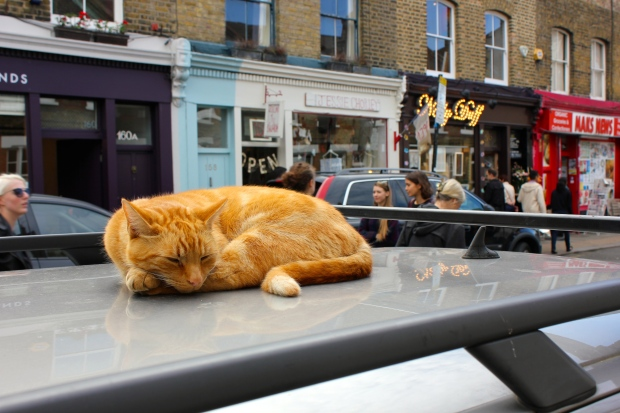 Columbia Road Orange Cat